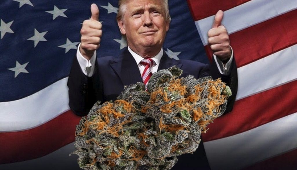 president trump to change legal laws on weed
